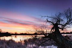 Dawn met kleurrijke wolken over een wilde vijver met eenzame schreeuwende boom in de herfstochtend Stock Foto