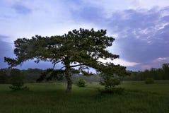 Dawn met mooie wolken en groene aard als beeld Stock Foto's