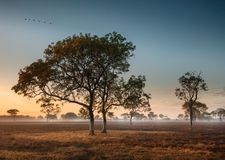 Dawn mist in the Australian Outback Darwin, Northern Territory. Dawn mist amongst trees in the Australian Outback Darwin, Northern Territory Royalty Free Stock Image