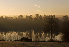 Dawn Mist at Forest Mere Royalty Free Stock Photos