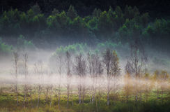 Dawn and mist landscape royalty free stock images