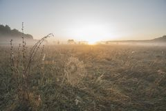 Dawn, morning mist over the meadow, cobwebs in the dew stock photography