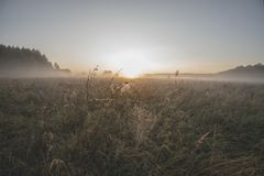 Dawn, morning mist over the meadow, cobwebs in the dew royalty free stock image
