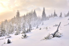 Dawn in mountain on snow. Dawn in mountain under heavy snow Stock Images