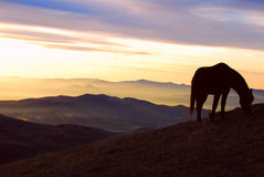 Dawn in the mountains. Mountain landscape at dawn with horse silhouette Stock Photo