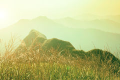 Dawn in mountains. Grass field on hill with sunlight. Fresh natu Royalty Free Stock Image