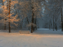 Dawn in a municipal park after a snowfall. Dawn in a city park on the outskirts of Kharkov after a snowfall; Ukraine in January 2013 royalty free stock image