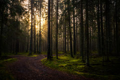 Dawn in the national park 'Smolensk lakeland'. Dawn in the national park 'Smolensk lakeland' . The sun's rays fall on the road, the grass and trees in a misty Stock Photography