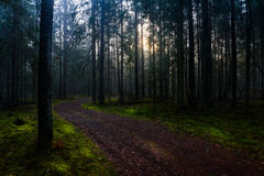 Dawn in the national park 'Smolensk lakeland'. The sun's rays fall on the road, the grass and trees in a misty forest Stock Image
