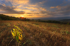 Dawn at the neglected agricultural land Stock Photos