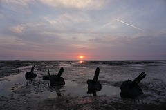 Beach sunrise.. Beach sunrise on Holme-next-the-sea with groynes in the foreground Royalty Free Stock Image