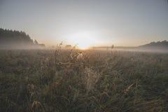 Dawn, ochtendmist over de weide, spinnewebben in de dauw royalty-vrije stock afbeelding