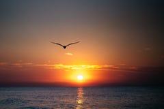 Dawn op de kust van de Zwarte Zee, golven Stock Fotografie