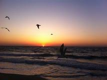 Dawn op de Zwarte Zee, Odessa, de Oekraïne, 2016 stock foto's