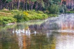 Dawn op een rustieke vijver in de de zomerochtend stock afbeeldingen
