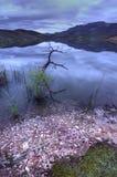 Dawn at Oregon lake stock images