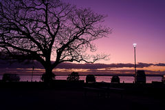 Dawn over the bay. Daybreak over the bay with silhouette of trees and cars Royalty Free Stock Photo