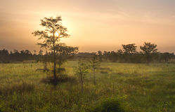 Dawn over Everglades Swamp. A beautiful sunrise over the Everglades wetlands in South Florida Stock Image