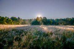 Dawn over het bos en het gebied Royalty-vrije Stock Foto