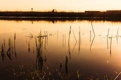 Dawn over lake shore Royalty Free Stock Image