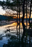 Dawn over lake with silhouette reflection tree Stock Photography