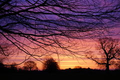 Dawn over Lincolnshire. Silhouetted trees against the dawn background Royalty Free Stock Photography