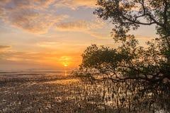 Dawn over mudflats stock fotografie