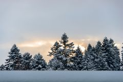 Dawn over the tops of pines. stock photo