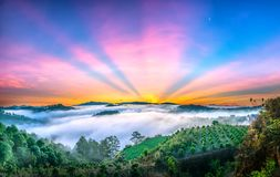 Dawn on the plateau in the morning with colorful sky,. Beneath the pine forests covered with fog shrouded the landscape so beautiful idyllic countryside Dalat Stock Photos