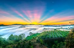 Dawn on the plateau in the morning with colorful sky,. Beneath the pine forests covered with fog shrouded the landscape so beautiful idyllic countryside Dalat Stock Image