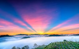 Dawn on the plateau in the morning with colorful sky,. Beneath the pine forests covered with fog shrouded the landscape so beautiful idyllic countryside Dalat Royalty Free Stock Photos