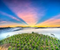 Dawn on the plateau in the morning with colorful sky,. Beneath the pine forests covered with fog shrouded the landscape so beautiful idyllic countryside Dalat Stock Photography