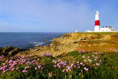 Dawn at Portland Bill. Portland Bill lighthouse at dawn with pink thrift growing on the cliff top stock photo