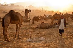 Dawn at Pushkar fair Royalty Free Stock Photo