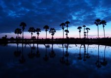 Dawn in the rain with palm Royalty Free Stock Photos