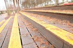 Dawn redwood leaves Stock Image