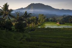 Dawn in the Rice Fields of Bali, Indonesia. stock photo