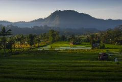Dawn in the Rice Fields of Bali, Indonesia. royalty free stock photo