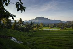 Dawn in the Rice Fields of Bali, Indonesia. stock images