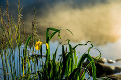Dawn on river with fog, first rays of sun. Beautiful golden iris as sunny symbol, herald of summer. Concept of seasons Stock Photo