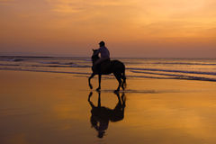 A dawn run. A horse having a paddle stock images