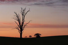 Dawn rural sillhouettes Royalty Free Stock Images