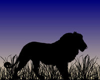 Dawn in savanne met leeuw stock illustratie