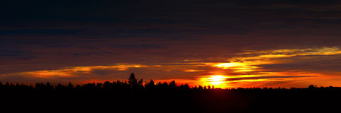 Dawn in Scandinavian forest Royalty Free Stock Images