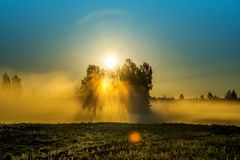 Dawn scenic landscape with mist and sun stock photo