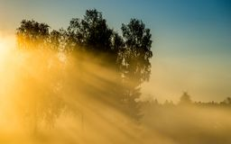 Dawn scenic landscape at sunrise. Dawn scenic landscape with mist and sun in a field near forest and birch trees glowing with sun light fog royalty free stock photo
