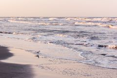 Before dawn on the sea coast, seagull. S on the shore royalty free stock images