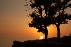 The sun rises behind two tree's silhouette. Stock Images