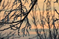 Dawn. The sky breaks through the branches of winter trees at dawn Stock Images