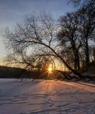 Dawn stralen van de de winterzon door de bomen op een bevroren meer Royalty-vrije Stock Afbeeldingen